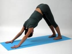 yoga anf nger 5 position des sonnengebets hund. Black Bedroom Furniture Sets. Home Design Ideas