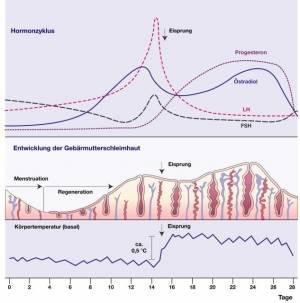 Progesteron Absetzen Schwangerschaft