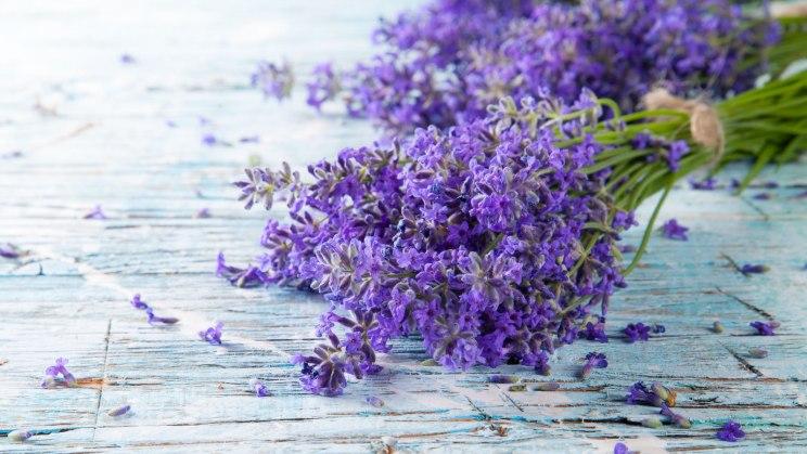 Lavendel beruhigt die Nerven