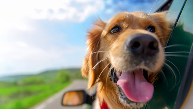Ein Vierbeiner genießt die Autofahrt, weil die Reiseapotheke für den Hund gut gepackt war.