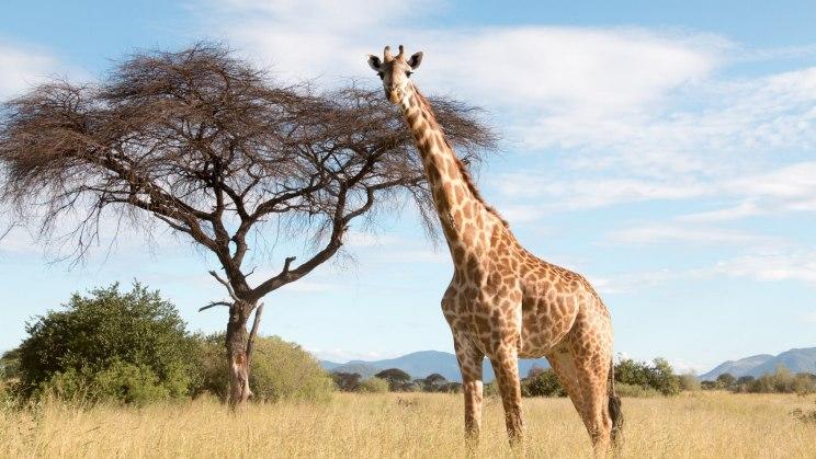 Eine Landschaft in Südafrika