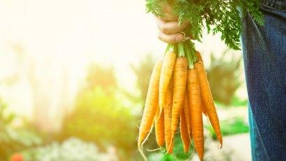 Karotten sind gute Ballaststofflieferanten