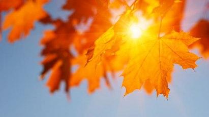 Sonne und Herbstblätter: Auch im Herbst und Winter raus an die frische Luft!