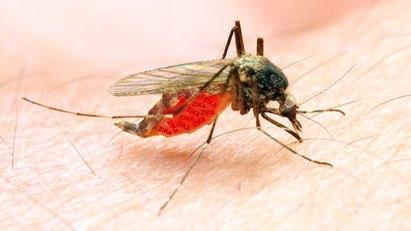 Mücke auf Arm: Das Zika-Virus kann das Guillain-Barré-Syndrom auslösen