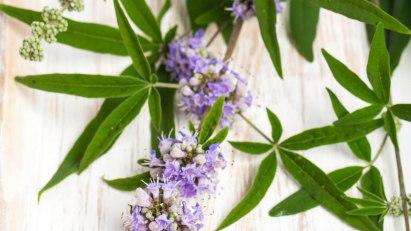 Rezeptfreie Mittel aus der Homöopathie helfen bei Erektiler Dysfunktion: Blühender Mönchspfeffer auf einem Brett